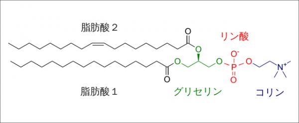 ホスファチジルコリン(レシチン)効果・効能|認知症やADHD予防になる